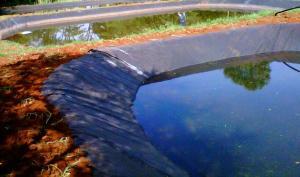 pond reflect