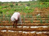 16 z irrigation